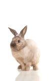 Nettes Kaninchen sitzen auf Weiß mit Blumen Stockfotografie