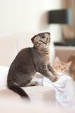 Nettes Katzespielen Stockbild