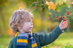 Nettes Kind, das rote Beeren im herbstlichen Wald auswählt Lizenzfreie Stockfotos