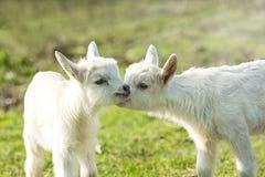 Nettes Kind zwei auf dem grünen Gras Stockfoto