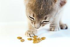 Nettes kleines abyssinisches Kätzchen, welches das trockene Katzenfutter lokalisiert isst Stockbilder
