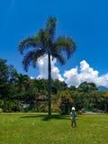 Nettes kleines Baby unter dem Palmenspiel im Park lizenzfreie stockbilder