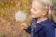 Nettes kleines blondes Mädchen mit enormem flaumigem Löwenzahn in der Hand Stockfotografie