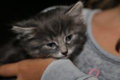 Nettes kleines entzückendes Kätzchen Stockbilder