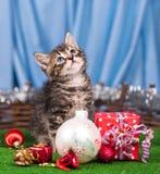 Nettes kleines Kätzchen Lizenzfreies Stockbild