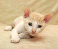 Nettes kleines Kätzchen Stockbild