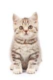 Nettes kleines Kätzchen Lizenzfreie Stockfotografie