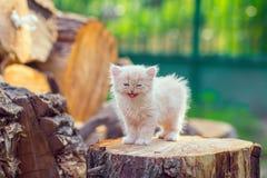 Nettes kleines Kätzchen stockbilder