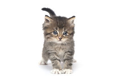 Nettes kleines Kätzchen auf einem weißen Hintergrund Stockfotos