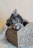 Nettes kleines Kätzchen, das in einer Holzkiste mit ihrem Mäusespielzeug schläft lizenzfreies stockbild