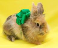 Nettes kleines Kaninchen mit grünem Bogen Lizenzfreie Stockbilder