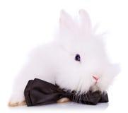 Nettes kleines Kaninchen mit Stutzenbogen Stockfotografie