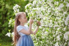 Nettes kleines Mädchen in blühendem Apfelbaumgarten am Frühling Stockbilder