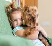 Nettes kleines Mädchen mit Yorkshire-Terrier Innen Stockfotografie
