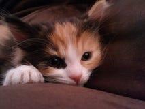 Nettes kleines Schwarzes und Kätzchen bräunen stockbild
