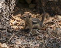 Nettes kleines Streifenhörnchen Lizenzfreie Stockfotografie