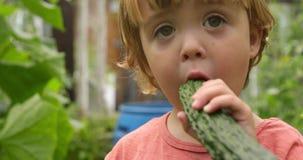 Nettes Kleinkind, das eine Gurke im Garten isst stock footage