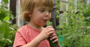 Nettes Kleinkind, das eine Gurke im Garten isst stock video