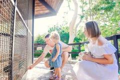 Nettes Kleinkindkindermädchen und ihre Eltern, welche die Kaninchen sitzen im Käfig am Zoo oder an der Farm der Tiere einziehen I stockbild