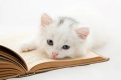 Nettes Kätzchen, das auf altem Buch auf Weiß liegt Stockbild
