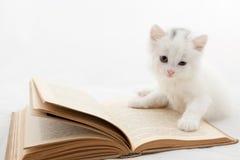 Nettes Kätzchen, das auf altem Buch liegt Stockfotos