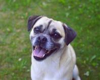 Nettes Lächeln des Pug zu einem Mann mit einer Kamera lizenzfreie stockfotos