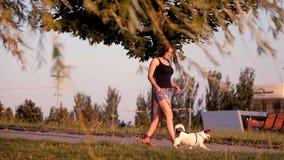 Nettes Mädchen, das mit einem Hund im Park bei Sonnenuntergang geht stock video