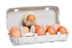 Nettes neugeborenes Küken mit Eiern Stockfotos