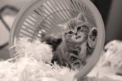 Nettes oben Guten Tag sagendes Kätzchen, Tatze Stockbild