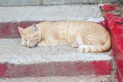 Nettes orange gestreiftes Katzenschlafen Stockbilder