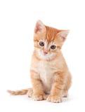 Nettes orange Kätzchen mit den großen Tatzen. Stockfotos