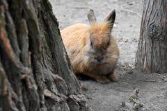 Nettes Ostern-Kaninchen Stockbild