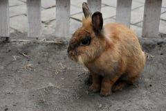 Nettes Ostern-Kaninchen Stockfoto