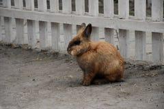 Nettes Ostern-Kaninchen Lizenzfreies Stockbild