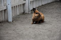Nettes Ostern-Kaninchen Stockfotos