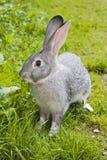 Nettes Ostern-Kaninchen lizenzfreie stockfotos