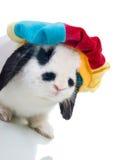 Nettes Ostern-Kaninchen in der Hutnahaufnahme getrennt Stockfotografie