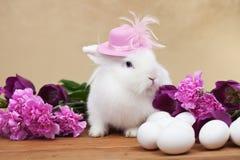 Nettes Ostern-Kaninchen mit Frühlingsblumen und -weißen Eiern Stockfotos