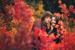 Nettes Paar ist frech und zeigt Gefühle zwischen roten Bäumen des Herbstes lizenzfreies stockfoto