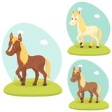 Nettes Pferd Lizenzfreies Stockbild