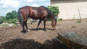 Nettes Pferd Lizenzfreie Stockfotografie
