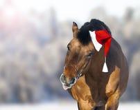 Nettes Pferd in Sankt-Hut, der Zunge zeigt stockbilder