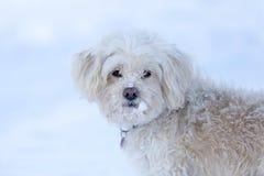 Nettes Porträt des Winters Hunde lizenzfreies stockfoto