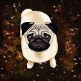 Nettes Porträt eines Pug Stockfoto