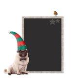Nettes Pughündchen, das einen Elfenhut, sitzend nahe bei leerem Tafelzeichen mit Weihnachtsdekoration, auf weißem BAC trägt stockbild