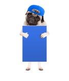 Nettes Pughündchen mit der Kappe, stehend, hochhalten leeres blaues Zeichen und gebend a, mögen mit dem Daumen, lokalisiert auf w stockbilder