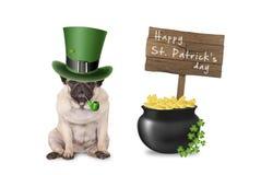 Nettes süßes Pughündchen mit dem St- Patrick` s Tageshut und -rohr, die nahe bei Topf mit Gold, Holzschild und Shamrock sitzen stockfoto