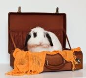Nettes Schmierölniederdruck-Kaninchen in einem Koffer lizenzfreies stockbild