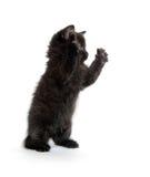 Nettes schwarzes Kätzchen auf Weiß Stockfotografie