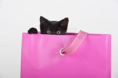 Nettes schwarzes Kätzchen, das aus Geschenkbeutelgeschenk heraus späht Stockfotos